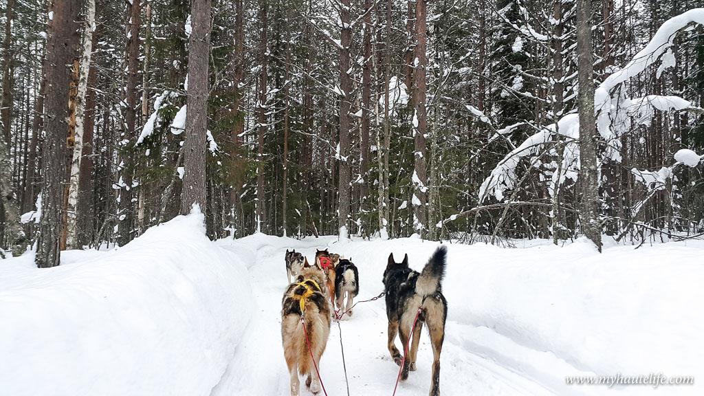 Husky Safari Rovaniemi12