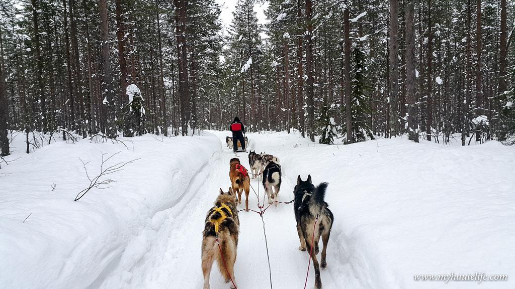 Husky Safari Rovaniemi9