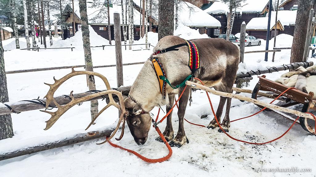 Reindeer Safari lapland11