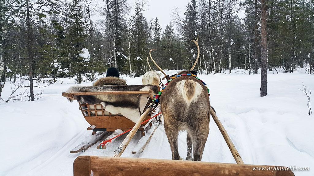 Reindeer Safari lapland3