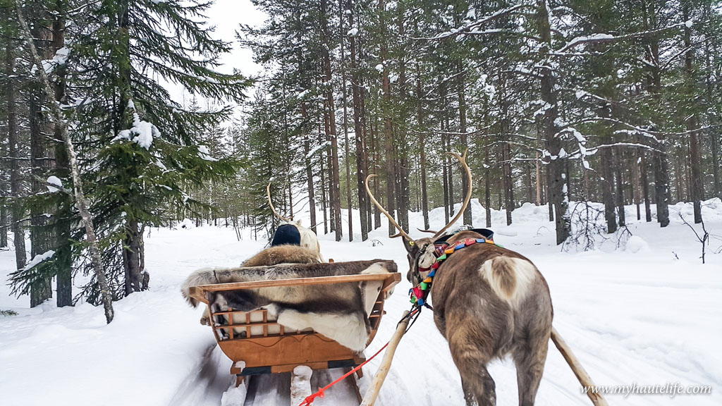 Reindeer Safari lapland4