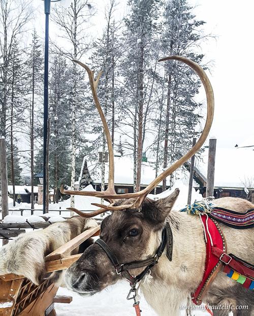 Reindeer Safari lapland9