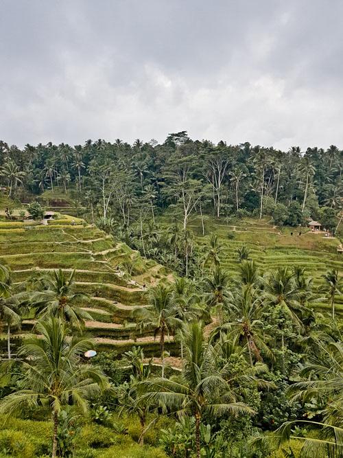 Ubud Travel Guide, Bali - MyHauteLife